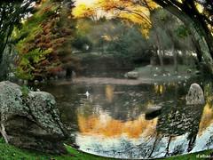 Recogimiento (Franco DAlbao) Tags: francodalbao dalbao samsung estanque pond parque park castrelos vigo otoo autumn ojodepez fisheye agua water