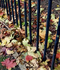 Autumn Fence Friday, HFF (NJKent) Tags: fencefriday fence leaves autumn eastmidlands leicester uk saveearth