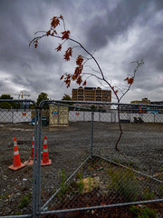 Beware of Falling Branches (Steve Taylor (Photography)) Tags: falling dropping branch container cone road traffic crane demolition site fence chainlink strange odd weird newzealand nz southisland canterbury christchurch cbd city trees weeds cloud sky stormy dead leaves