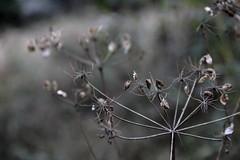 IMG_7050-2 (nicole.schmidtova) Tags: photography czechrepublic canon canon60d czech countryside nature simply autumn fall