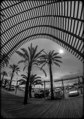 Silhouetted. (CWhatPhotos) Tags: cwhatphotos camera photographs photograph pics pictures pic picture image images foto fotos photography artistic that have which contain with olympus four thirds 43 spanish spain mallorca majorca island october 2016 weather alcudia black white mono monochrome samyang fisheye fish eye lens wide angle view tourist info information office wood