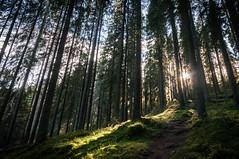 In the woods (MiiaToivonen) Tags: woods forest tree mnty mets puu trees puut puita finland suomi syksy fall autumn green sun light sammal sammale nationalpark luonnonpuisto