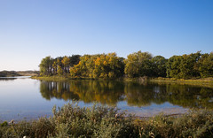 L1001528.jpg (romanboed) Tags: leica m 240 summicron 28 europe netherlands holland dutch wassenaar dunes landscape forest wood pond coast travel autumn fall afternoon sunny blue sky water reflection