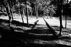 Lighting the Shadows. (JamieHaugh) Tags: formby liverpool trees wood path blackandwhite blackwhite monochrome outdoor outdoors