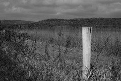 Ghost Post (Fluff Tater) Tags: riverlandconservancy fall fenceline post blackandwhite monochrome weathered bleached