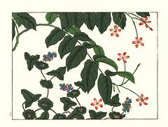 Tearthumb and rangoon creeper (Japanese Flower and Bird Art) Tags: flower tearthumb persicaria perfoliata polygonaceae rangoon creeper quisqualis indica combretaceae hoitsu sakai kiitsu suzuki kimei nakano nihonga woodblock picture book japan japanese art readercollection