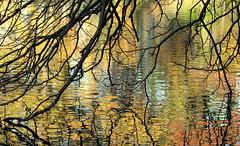 Automnal reflections (Croix-roussien) Tags: reflection nature eau lyon reflet couleur nationalgeographic potd:country=fr