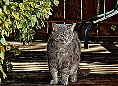 Cliffy-Painted (Chris Sorge) Tags: dog pet art cat