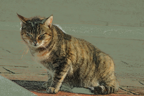 Le chat au soleil