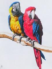 GUACAMAYOS (kilezabala14) Tags: color art paint drawing aves draw dibujo realismo pintura lpiz hiperrealismo guacamayos