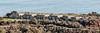 Battery Yates, Ft Baker (SBGrad) Tags: nikon gun fort marin battery artillery nikkor fortification 1904 2014 alr ftbaker 80200mmf28dafs coastalartillery batteryyates d300s endicottperiod m1902mi