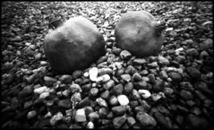 pomegranates # 2 (Roberto Messina photography) Tags: bw italy analog hc110 pinhole fim analogue february zeroimage zero69 2015 dilb