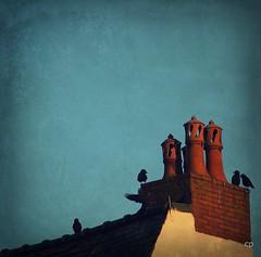 ... (kate053) Tags: maison oiseaux toits chemines corbeaux corneilles