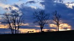 HorsesOnTheHill (T's PL) Tags: trees sunset sky tree clouds virginia nikon outdoor dusk va vatech virginiatech blacksburgva yabbadabbadoo d7000 tamron18270 nikontamron nikond7000 tamron18270mmf3563diiivcpzd