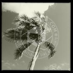 FLORIDA-335