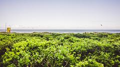 Campeche (John-Thomas Nagel) Tags: brazil landscape florianpolis vegetation santacatarina campeche jtn brasilienbrazilbrasil florianpolisflorianopolisfloripa