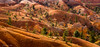 Bryce Canyon National Park: ocher's color, Utah, USA (christian.rey) Tags: park garden landscape utah sony canyon queens trail national bryce alpha paysage 77 ocre ocher étatsunis 18135 abigfave