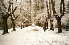 Allee im Schnee (Turikan) Tags: schnee winter snow 120 zeiss fuji superia ikon dortmund xtra nettar rombergpark