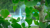Ginkgo (jasonclarkphotography) Tags: newzealand christchurch ginkgo sony biloba nex canterburynz nex5 jasonclarkphotography