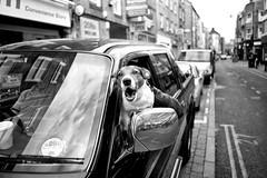 (Alan Schaller) Tags: street leica white black alan photography m and mm 24mm monochrom asph schaller typ 246 elmarit