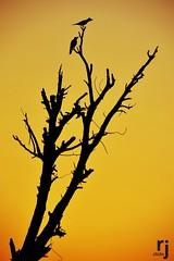 Tree and The Birds (RJ-Clicks) Tags: rehanjamil rjclicks nikond5100 nikon d5100