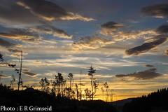 Skageskogen , Sunrise 0450 am (2000stargazer) Tags: skageskogen bergen norway sunrise landscape silhouette light dark golden clouds sky heaven trees canon