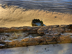 Old jetty was here (elphweb) Tags: hdr beach log old lake shore oldjetty sand
