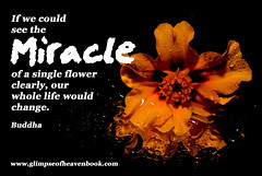 See The Miracle... (GlimpseofHeavengirl) Tags: blessings enlightenment glimpseofheaven growth life miracle teaching understanding