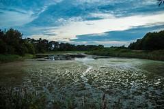 Lake or Swamp? (Jamo_115) Tags: d3200 nikon sigma 1750mm lake swamp water wildlife landscape greenery evening waterside lound norfolk