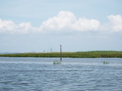 5 River Delta Alabama (120) (Stonehenge 68) Tags: 5riversdelta mobile delta wildlife alligator duck pelican water waterhyacinth hemlock snowyegret alabama