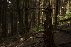 Troll (emanuel.foglia) Tags: troll mitologia nordica scandinava miti norreni d7200 nikon sigma1835 art foresta abeti alberi tronco legnomorto penombra bosco luce ombra