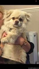 Mon, Aug 1st, 2016 Lost Male Dog - Wellington Lane Area, Templeogue, Dublin (Lost and Found Pets Ireland) Tags: lostdogwellingtonlaneareadublin lost dog wellington lane area dublin august 2016