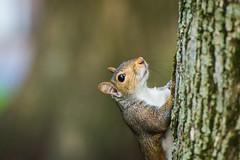 The Park Boss. (Omygodtom) Tags: abstract animalplanet squirrel park furry tree outdoors portrait pov dof bokeh natural nikon d7100 nikon70300mmvrlens branch bright flickr facebook