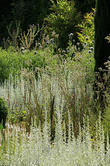 5 Old Bladbean Stud Gardens, August 2016 (Jim_Higham) Tags: ngs open garden scheme yellow book bladbean near canterbury flowers plants shrubbery vegetables obelisks purple spiky walled carol bruce