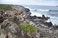 Dragon's Teeth Maui (yumievriwan) Tags: ocean rock landscape hawaii lava maui