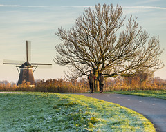 An early morning walk. (www.mroosfotografie.nl) Tags: morning autumn winter light white cold tree windmill dutch grass walking landscape golden scenery or great peaceful almost