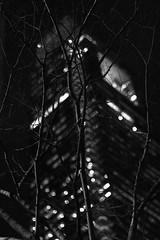 Urban Growth (phillytrax) Tags: city urban blackandwhite bw usa tree philadelphia monochrome vertical night america skyscraper downtown unitedstates pennsylvania centercity depthoffield pa highrise philly grayscale 215 comcastcenter canonef50mmf14usm cityofbrotherlylove comcastbuilding downtownphiladelphia comcasttower downtownphilly