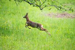 nature austria nikon europe nikkor 70300mm osterreich d800 природа австрия европа worthersee 70300mmf4556gvr nikkor70300mmf4556gifedafsvr nikond800