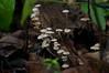 Fabulous forest funghi 11 (Sven Rudolf Jan) Tags: rainforest funghi papuanewguinea tufi