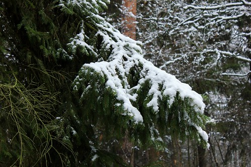 "Im Winterwald (mit Schnee) 2015 • <a style=""font-size:0.8em;"" href=""http://www.flickr.com/photos/69570948@N04/16218584729/"" target=""_blank"">View on Flickr</a>"