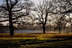 Winter landscape - Hanbury Hall (Macro light) Tags: landscape worcestershire nationaltrust westmidlands winterlandscape droitwich hanbury wintersunshine hanburyhall winterwalks