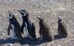 Puerto Madryn-109