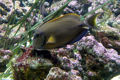 Aquarium de Paris  (17) (Mhln) Tags: paris aquarium requin poisson trocadero poissons meduse 2015 cineaqua