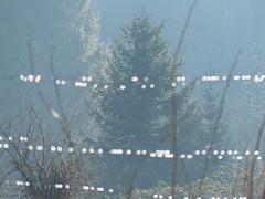 Perlen (Firebeetle) Tags: fence germany dewdrops wire tau zaun tautropfen tanne drahtzaun gnningen