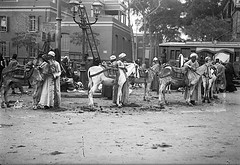 02_Egypt - Donkey Drivers (usbpanasonic) Tags: men northafrica muslim islam egypt culture nile cairo nil egypte islamic  caire moslem egyptians egyptiens donkeyriders transportationdrivers