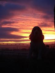 Dawn (cocopie) Tags: clouds sunrise dawn spaniel