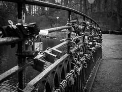 Safe bridge - Rombergpark Dortmund (Thomas Kriehn Photography) Tags: bridge bw white black germany deutschland olympus nrw sw 365 brcke padlock dortmund schwarz omd weis rombergpark project365 365days schlos em5 3652015