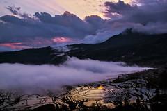 Yuanyang County  Duoyishu Terraced Field (9) () Tags: china sunrise yunnan       flickrhongkong yuanyangcounty   flickrhkma duoyishuterracedfield
