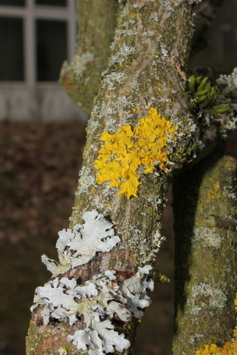 "Flechte (Lichen) Soltau 2015 • <a style=""font-size:0.8em;"" href=""http://www.flickr.com/photos/69570948@N04/16512186186/"" target=""_blank"">View on Flickr</a>"
