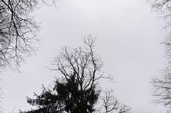 March 3, 2015 (THE ZEN DIARY by David Gabriel Fischer) Tags: trees sky david gabriel photography photo diary journal buddhism minimal zen mindfulness meditation connection fischer zazen interrelation